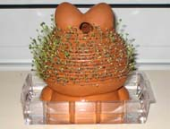 Rear view of Chia Pet after 10 days