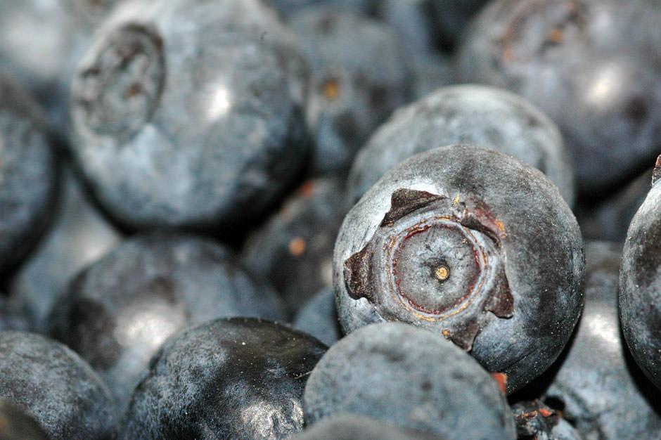 Close-Up Photo: Blueberries – JoshMadison.com